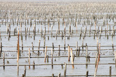 Oyster farms on yunlin,Taiwan Royalty Free Stock Photo