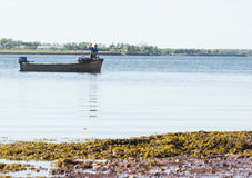 Oyster Fishing Stock Images