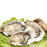 Oyster. Fresh opened oyster on white background Royalty Free Stock Photo