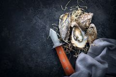 Oyster. Fresh oysters closeup with knife on dark background. Oyster dinner in restaurant. Gourmet food stock photos
