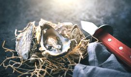 Oyster. Fresh oysters closeup with knife on dark background. Oyster dinner in restaurant. Gourmet food stock image