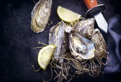 Oyster. Fresh oysters closeup with knife on dark background. Oyster dinner in restaurant royalty free stock photography