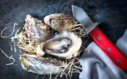 Oyster. Fresh oysters closeup with knife on dark background. Oyster dinner in restaurant stock photos