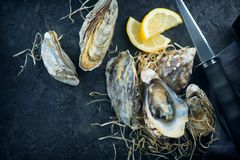 Oyster. Fresh oysters closeup with knife on dark background. Oyster dinner in restaurant royalty free stock images