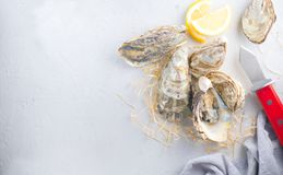 Oyster. Fresh oysters closeup with knife. Oyster dinner in restaurant. Gourmet food. Border design with copy space for your text. Top view, flatlay. Wide royalty free stock photography