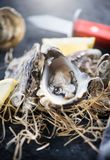 Oyster. Fresh oysters closeup with knife. Oyster dinner in restaurant. Gourmet food royalty free stock photography