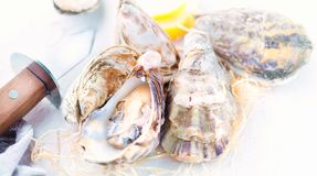 Oyster. Fresh oysters closeup with knife. Oyster dinner in restaurant stock photography