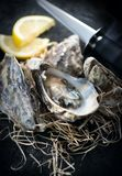 Oyster. Fresh oysters with knife closeup. Oysters on dark slate background. Gourmet food stock photography