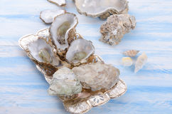 Oyster. A fresh and tasty oyster Royalty Free Stock Images