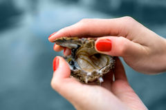 Oyster in hands. Woman opening fresh oyster on water background near the sea Royalty Free Stock Photography