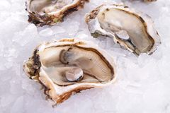 Oyster in ice Stock Images
