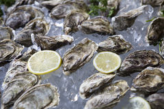 Oyster with ice and lemon Royalty Free Stock Photography