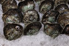 Oyster on ice, raw oyster fresh, sea food oyster selective focus. The oyster on ice, raw oyster fresh, sea food oyster selective focus stock photography
