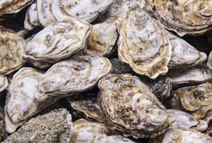 Oyster. Image of some oyster at San Miguel market Royalty Free Stock Images
