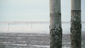 Oyster island on the pillar with low tide muddy swamp sea ocean background