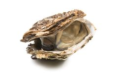 oyster isolated stock photo