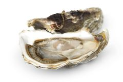 Oyster on white Royalty Free Stock Photo