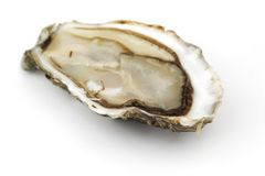 Oyster on white Stock Image