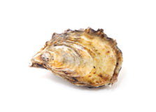 Oyster. Isolated on white background Stock Photography
