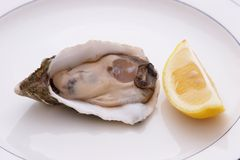 Oyster And Lemon Stock Photos