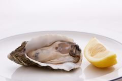 Oyster and Lemon Royalty Free Stock Photos