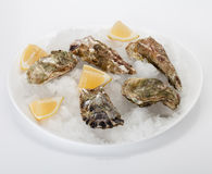 Oyster with lemon Royalty Free Stock Image