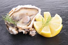 Oyster and lemon Stock Photography