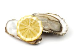 Oyster and lemon on white Stock Photos