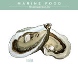 Oyster. Marine Food. Oyster illustration. Marine food, editable gradient vector Royalty Free Stock Image