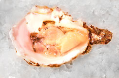 Oyster mediterranean sea food fresh on ice barcelona market Stock Images