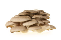 Oyster mushroom Royalty Free Stock Photos