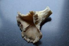 Oyster mushroom Stock Photo