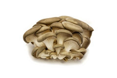 Oyster mushroom on a white background Royalty Free Stock Photos