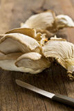 Oyster mushroom Stock Images