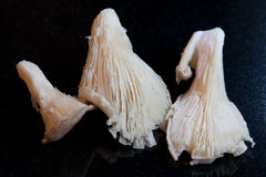 Oyster Mushrooms. Three oyster mushrooms against a black granite background Stock Photo