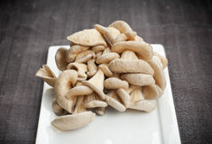 Oyster Mushrooms Stock Images