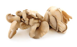 Free Oyster Mushrooms Stock Photo - 4350020