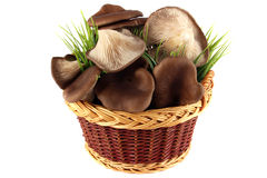 Oyster mushrooms in the basket Royalty Free Stock Photo
