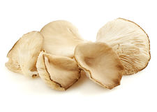 Oyster mushrooms isolated royalty free stock images