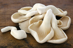Oyster Mushrooms on Old Timber. Oyster mushrooms on old rough timber Royalty Free Stock Images