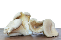 Oyster mushrooms - Pleurotus ostreatus closeup Stock Image