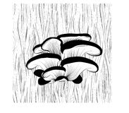 Oyster mushrooms on the tree Royalty Free Stock Photo