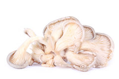 Oyster mushrooms on white Royalty Free Stock Image