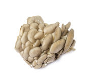 Oyster mushrooms. On a white background Royalty Free Stock Photography