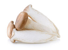 Oyster mushrooms Royalty Free Stock Photography