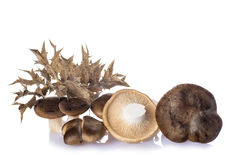 Oyster mushrooms  on a white background Stock Photo