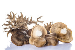 Oyster mushrooms  on a white background Stock Photography