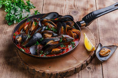 Oyster mussels in red sauce Royalty Free Stock Photography