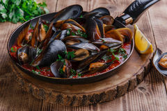 Oyster mussels in red sauce Royalty Free Stock Photos