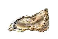 Oyster. One fresh oyster isolated on white background Royalty Free Stock Images